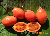 seed package (orange-red large fruited)